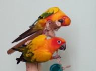 alloggiamento pappagalli