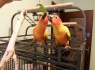 gabbia allestita per pappagallo
